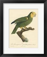 Framed Parrot, PL 98