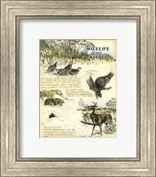 Framed Wildlife