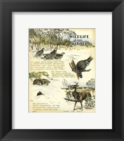 Framed Wildlife