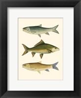 Framed Antique Fish I