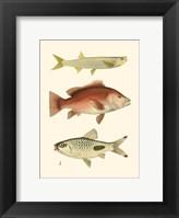 Framed Antique Fish II