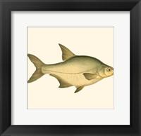 Framed Small Antique Fish I