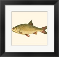 Framed Small Antique Fish II