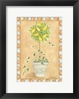 Framed Tuscan Fruit II