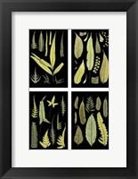 Framed Mini Ferns on Black