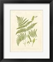 Ferns with Platemark I Framed Print