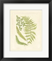 Framed Ferns with Platemark III