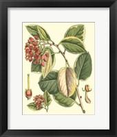 Framed Botanical Fantasy IV