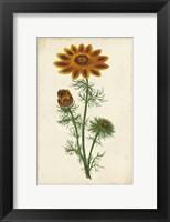 Framed Vibrant Curtis Botanicals I