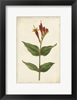 Framed Vibrant Curtis Botanicals III