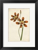 Framed Vibrant Curtis Botanicals IV