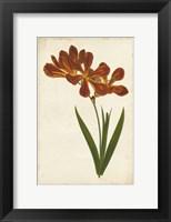 Framed Vibrant Curtis Botanicals VI