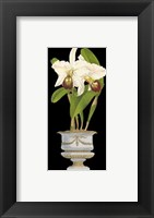 Framed Orchids in Silver II
