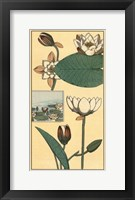 Framed Water Lily I