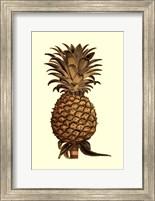 Framed Sepia Pineapple (H) I