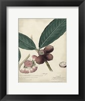 Framed Botanical IV