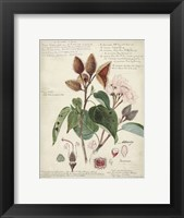 Framed Botanical V