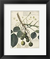 Framed Botanical VI
