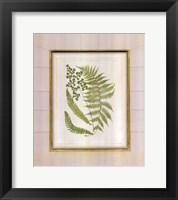 Framed Fern with Crackle Mat (H) II