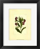 Framed Red Curtis Botanical I