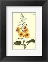 Framed Yellow Curtis Botanical II