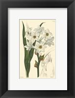 Framed White Curtis Botanical I