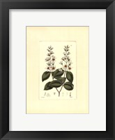 White Curtis Botanical II Framed Print