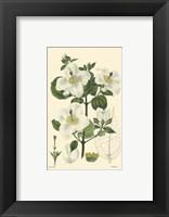 White Curtis Botanical III Framed Print