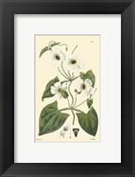 Framed White Curtis Botanical IV