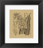 Framed Orchid on Khaki(WG) III
