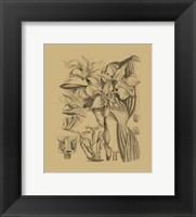 Framed Orchid on Khaki(WG) V