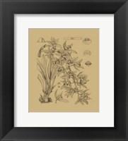 Framed Orchid on Khaki(WG) VII