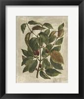 Framed Printed Deshayes Trees II