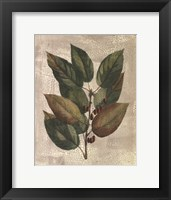 Framed Printed Deshayes Trees IV