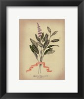 Herb Series I Framed Print