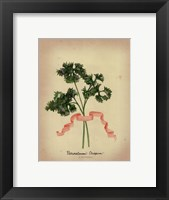 Herb Series II Framed Print