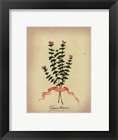 Herb Series VI Framed Print