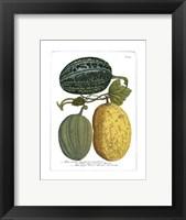 Framed Antique Melons I