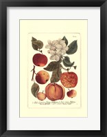 Framed Fruits I