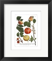 Framed Fruits IV