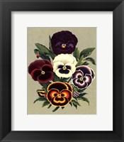 Framed Tricolor Pansies I