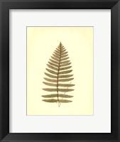 Lowes Fern III (PP) Framed Print