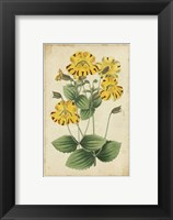 Framed Curtis Blooms in Yellow I