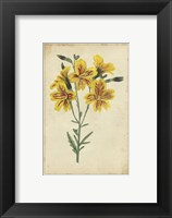 Framed Curtis Blooms in Yellow IV