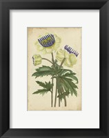 Framed Curtis Blooms in White III