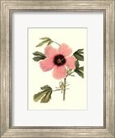 Framed Hibiscus II