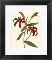 Framed Fiery Florals I