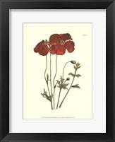 Framed Fiery Florals II