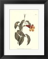 Framed Fiery Florals III