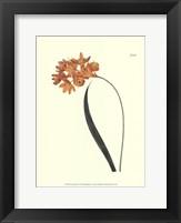 Framed Fiery Florals IV